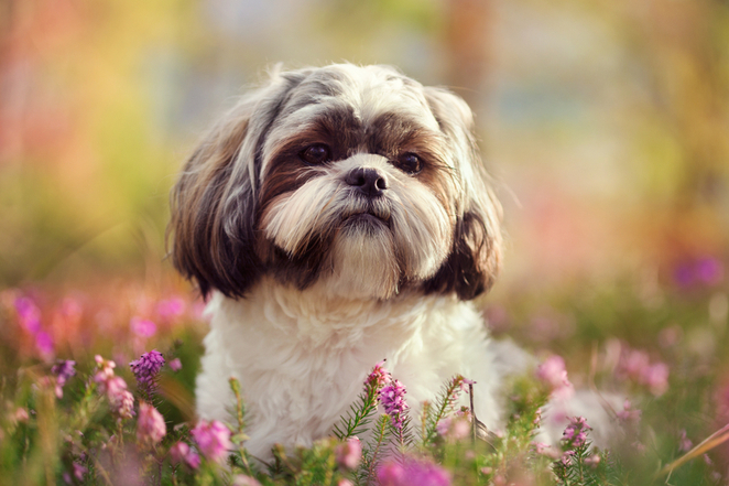 Top 25 Cutest Dog Breeds You'll Fall In Love With 2