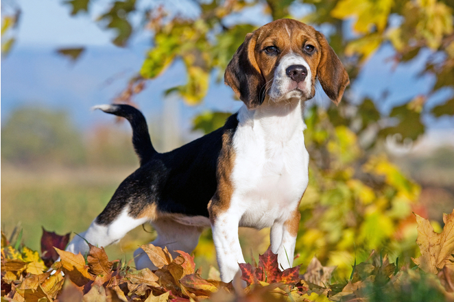 Top 25 Cutest Dog Breeds You'll Fall In Love With 10